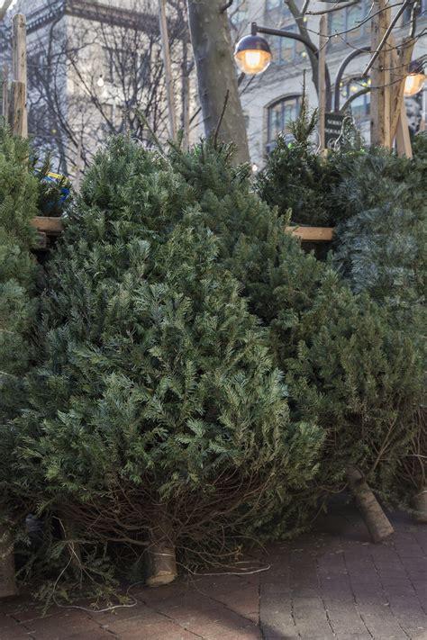 meet the new york city christmas tree entrepreneur who