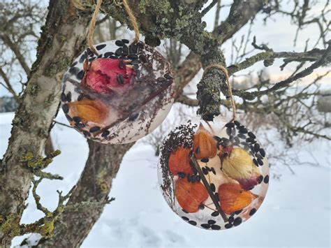 Rotā dārzu arī ziemā: kā pagatavot ledus bļodiņas ...