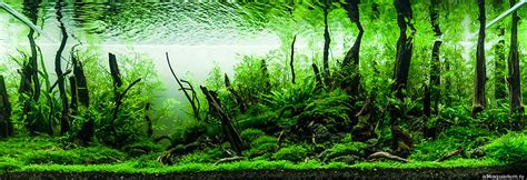 Aquascape Forest - artists create mesmerizing miniature worlds all within