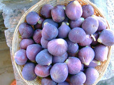 comment cuisiner les figues la figue faux fruit mais vrai plaisir recettes de figues