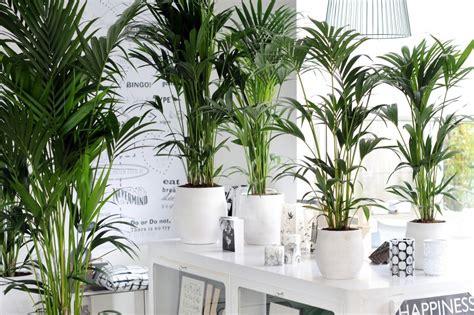 Die Top 5 Luftreinigenden Pflanzen