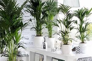Welche Pflanzen Fürs Schlafzimmer : die top 5 luftreinigenden pflanzen wohnen pflanzen garten und zimmerpflanzen ~ Frokenaadalensverden.com Haus und Dekorationen
