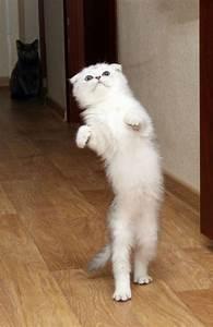 190 best images about Let's dance on Pinterest | Cats ...