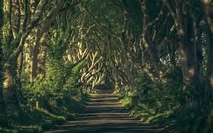 Magical Woods Wallpaper