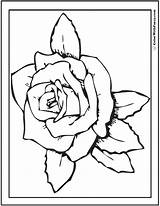 Rose Coloring Pages Kindergarten Printable Pdf Printables Colorwithfuzzy sketch template