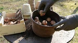 Dahlien überwintern Topf : knollenpflanzen wie gladiolen und dahlien vorziehen anleitung ~ Orissabook.com Haus und Dekorationen