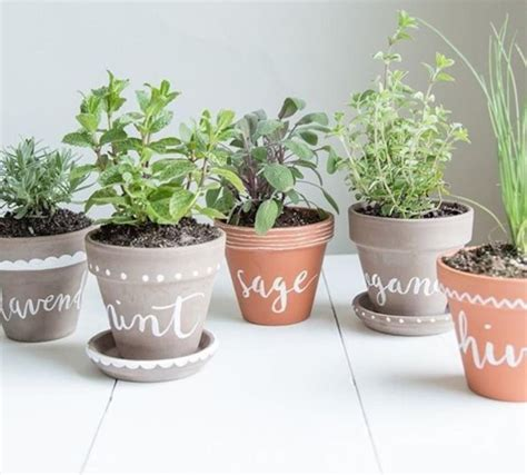 Window Sill Herb Garden Pots by Painted Pots For Herbs On Window Sill Our Garden On