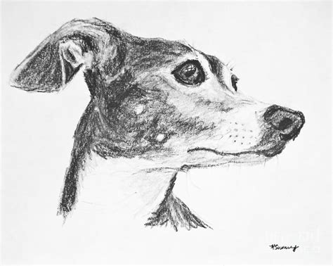 foto de Italian Greyhound Sketch in Profile Drawing by Kate Sumners