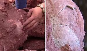 SHOCK DISCOVERY: Giant dinosaur eggs found INTACT - & they ...