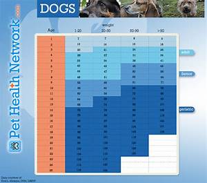 Determine The Age Of Your Dog In Human Years