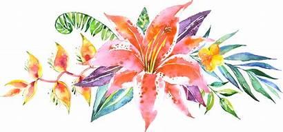 Watercolor Flower Flowers Floral Vector Line Clipart