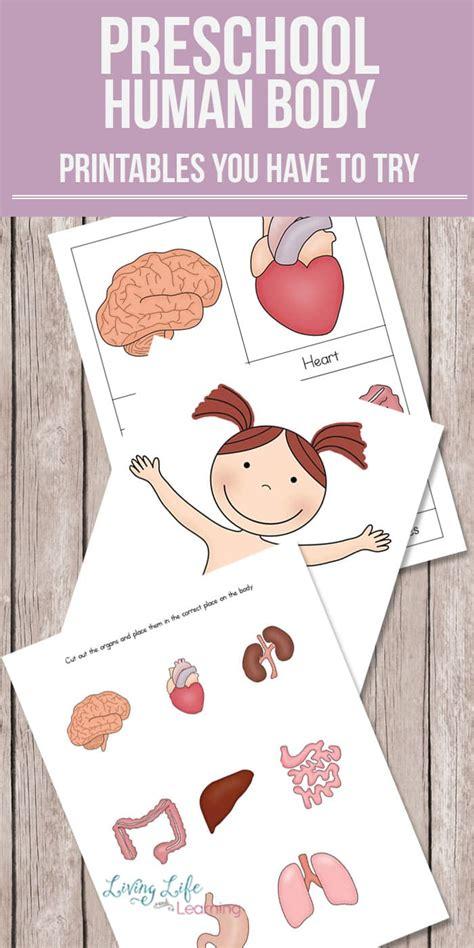 preschool human printables 818 | free preschool human body printables