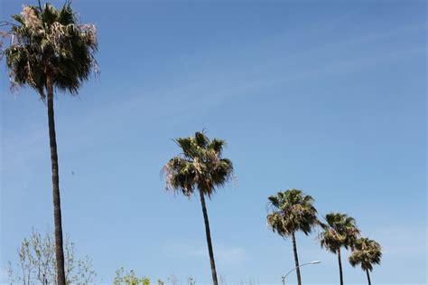 South La Loses Trees In Crenshaw/lax Metro Line Construction