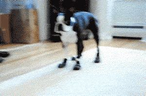 funny gifs   time dose  funny