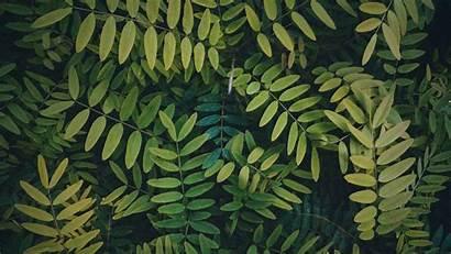 Bush Branches Leaves Plant Dahon Sanga Halaman