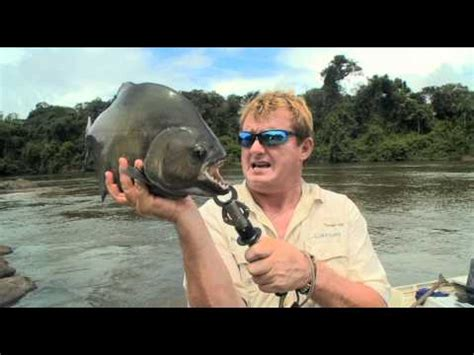 These Giant Black Piranhas From The Amazon Are Absolutely