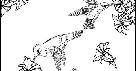 Hummingbirds And Flower Coloring Pages Sketch Coloring Page