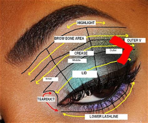 The Fancy Face Tips For Beginners Eyeshadow Placement