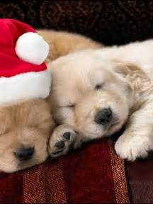 Cute Baby Puppies Christmas