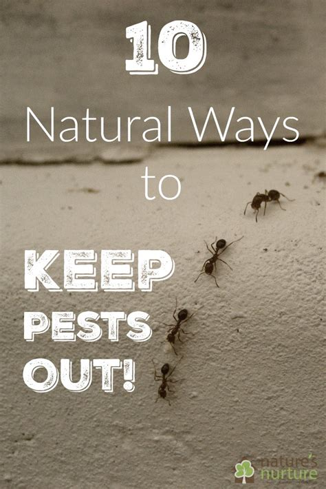 Keep Pests Out Of Your Home With These 10 Natural Pesticides