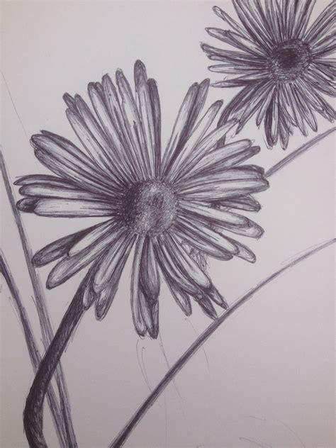 daisy biro drawing amy pack biro drawing drawings