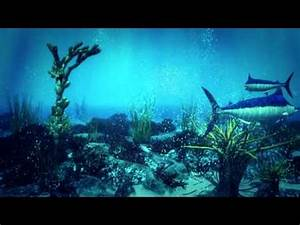 3D UNDERWATER SCENE FISH ANIMATION CORAL - YouTube
