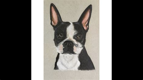 colored pencil speed drawing drawing  boston terrier