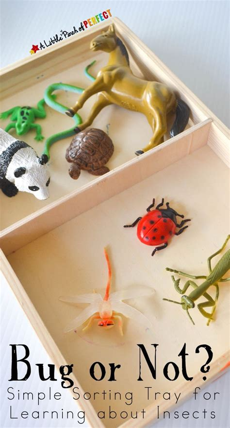 preschool bug lesson plans 160 best images about insect preschool theme on 204