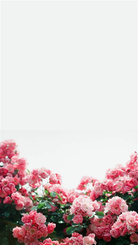 flower iphone background white pink floral flowers border frame iphone phone