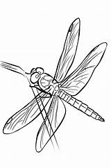 Coloring Pages Dragonfly Patterns Colouring Pattern Cartoon Dragonflies Template Wings Drawings Butterflies Glass Stained Adult Dragon Fly Drawing Embroidery Butterfly sketch template