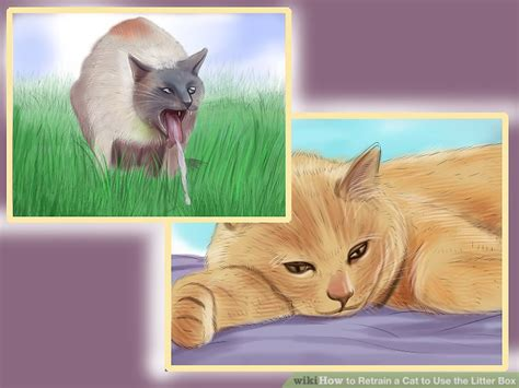 3 Ways To Retrain A Cat To Use The Litter Box Wikihow
