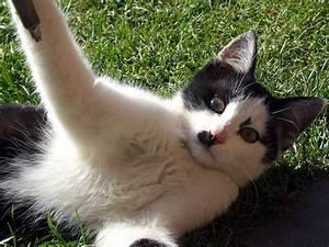 Schwarz Weiß Bilder Tiere : katze schwarz weiss hintergrundbilder kostenlos tiere ~ Markanthonyermac.com Haus und Dekorationen