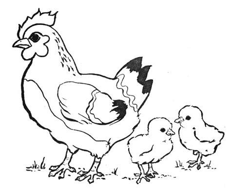 dessins de coloriage poule  poussins  imprimer