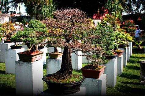Einen Bonsai Garten Anlegen