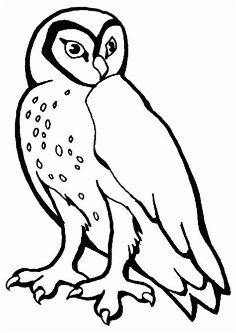 printable owl template coloring home