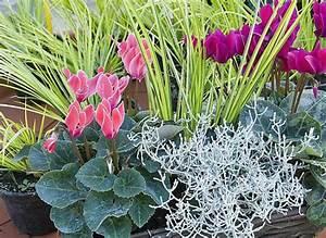 Fleur D Hiver Pour Jardinière : jardin en pot 4 compositions fleuries pour longtemps ~ Dailycaller-alerts.com Idées de Décoration