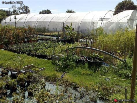 la maison du bananier coueron les galeries photo de plantes de gardenbreizh