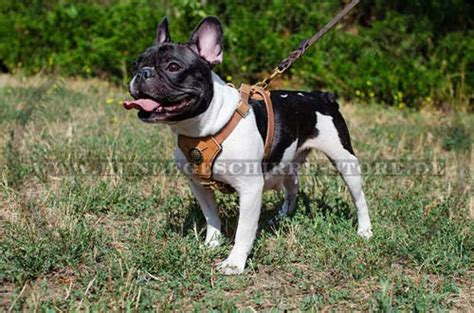 gepolstertes hundegeschirr fuer franzoesische bulldogge