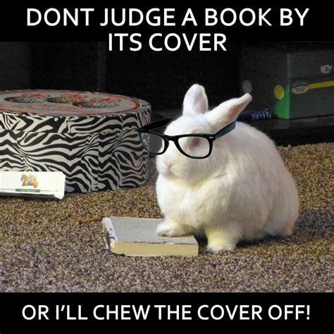 Cute Easter Meme - rabbit ramblings funny bunny memes my rabbits eaten so many books bun pinterest