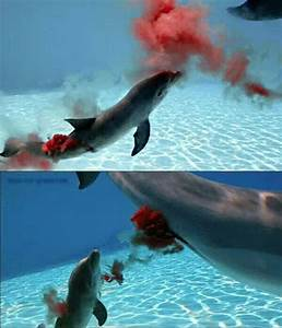 57 best Dolphins images on Pinterest | Baby dolphins ...