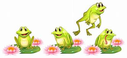 Frog Frogs Water Lily Kikkers Cartoon Ranas