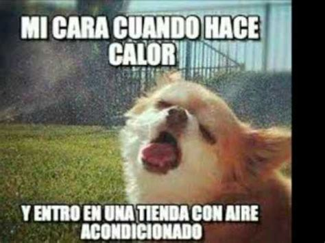 Memes Divertidos - memes divertidos sobre el calor youtube