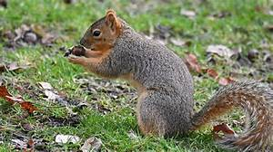Plants That Give Off Light Totally Nuts Squirrels Bury Their Food According To Type