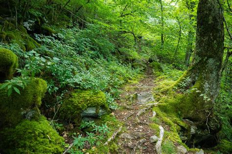 Laurel Mountain Trail on HikeWNC
