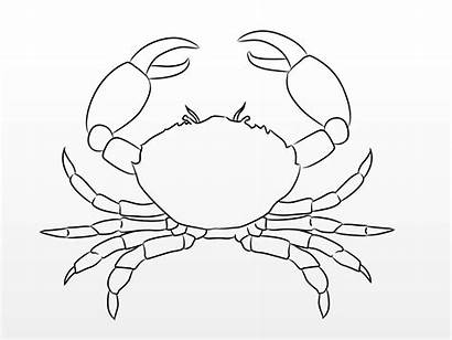 Crab Drawing Draw Wikihow Sea Crabs Step