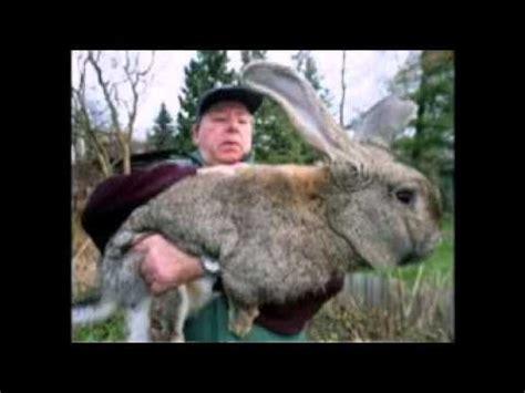 Die 5 Größten Tiere Der Welt Youtube