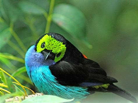 Top 10 Most Beautiful Birds In The World Tapandaola111 S