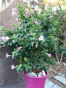 Plantes D Hiver Extérieur Balcon : que faire d 39 un diplad nia en hiver paris c t jardin ~ Nature-et-papiers.com Idées de Décoration