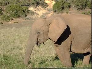 How To Read A Control Chart Tuskless Female Elephant Photo