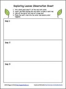 science for kids exploring how water travels through With science observation template